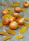 Cebollas en el vector. Imagenes de archivo