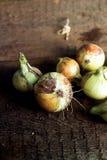 Cebollas en la madera fotografía de archivo