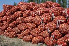Cebollas en los bolsos, buena cosecha Fotografía de archivo libre de regalías