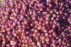 Cebollas en mercado rural indio Imagen de archivo libre de regalías