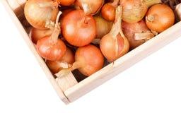 Cebollas en una caja Fotografía de archivo