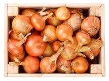 Cebollas en una caja Imagen de archivo libre de regalías