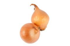 Cebollas frescas Imagen de archivo libre de regalías