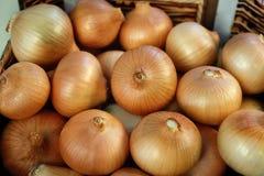 Cebollas frescas Fotografía de archivo libre de regalías