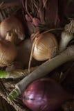 Cebollas orgánicas del jardín Foto de archivo libre de regalías