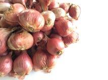 Cebollas para el cocinero Fotos de archivo libres de regalías