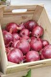 Cebollas rojas Fotografía de archivo libre de regalías