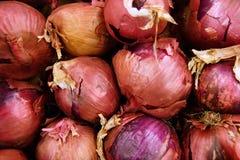 Cebollas rojas Imagen de archivo