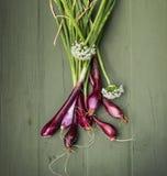 Cebollas rojas de cosecha propia para su salud Foto de archivo