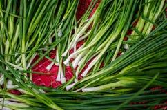 Cebollas verdes jovenes en cesta roja Fotos de archivo