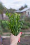 Cebollas verdes, perejil, vitaminas y nutrición apropiada imágenes de archivo libres de regalías