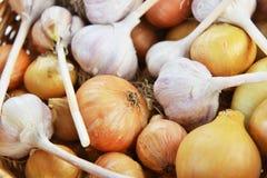 Cebollas y ajo Imagenes de archivo