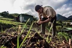 Cebolletas crecientes del trabajador en America Central Fotografía de archivo libre de regalías