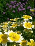 Cebolletas y flores Imagen de archivo libre de regalías