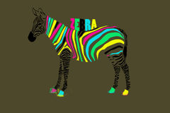 Cebra colorida Imagen de archivo