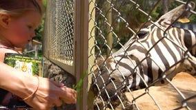 Cebra de alimentación de la madre y de la hija en parque zoológico almacen de metraje de vídeo