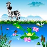 Cebra en el riego Imagen de archivo libre de regalías