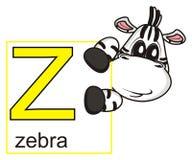 Cebra que lleva a cabo una muestra con la letra Z Fotografía de archivo libre de regalías