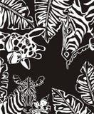 Cebras ilustración del vector