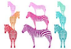Cebras coloridas, sistema del vector Foto de archivo libre de regalías