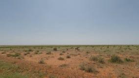 Cebras en Kenia almacen de video