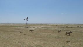 Cebras en Kenia almacen de metraje de vídeo