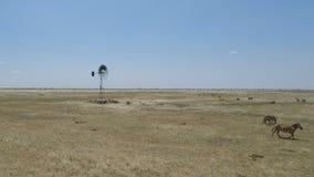 Cebras en Kenia metrajes