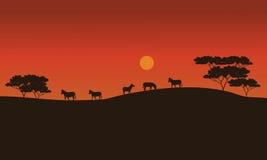 Cebras en sabana en la puesta del sol stock de ilustración