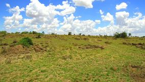 Cebras que pastan en sabana en África metrajes