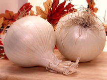 cebula żywności białe Fotografia Royalty Free