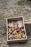 Cebula, czerwone cebule i beetroot, Fotografia Stock