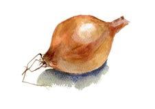 Cebule dla magazynu ilustracja wektor