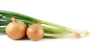 Cebule i scallions Zdjęcie Stock