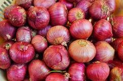 Cebuli lub Allium cep Zdjęcie Stock