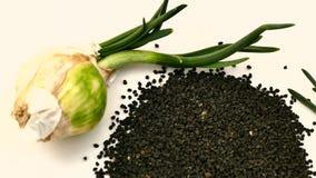 Cebulkowy kultywacji i cebuli ziarno, cebulkowa kultywacja, cebul ziarna, cebul ziarna na bielu gruntuje cebuli i kie?kowa?, zdjęcie wideo