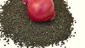 Cebulkowy kultywacji i cebuli ziarno, cebulkowa kultywacja, cebul ziarna, cebul ziarna na bielu gruntuje cebuli i kie?kowa?, zbiory