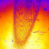 Cebulkowy urlop pod mikroskopią Obrazy Stock