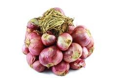 cebulkowy warzywo Obrazy Stock