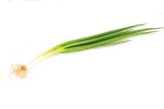cebulowe scallion wiosna zdjęcia stock