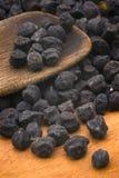 Cece nero del Murgia (Italia) Fotografia Stock