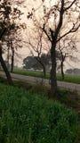 Ceci la la belle PIC du coucher du soleil dans le domaine de mon village Images libres de droits