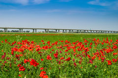 Cecina - Motorway from Rosignano Solvay to Livorno, Tuscany, Ita. Motorway from Rosignano Solvay to Livorno, Leghorn, Italy, poppies in a field stock images