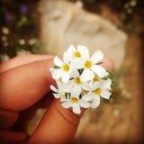 Cecret See mit Blumen Stockfotos
