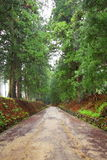 Cedar avenue of Nikko Stock Images