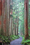 Cedar Avenue. Of Togakushi, Nagano prefecture, Japan Royalty Free Stock Photo