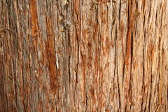 Cedar Bark Stock Images