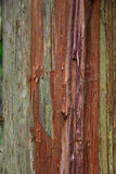Cedar Bark resistido Foto de Stock Royalty Free