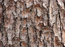 Cedar bark texture Stock Image