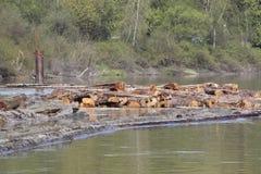 Cedar Boom on River Royalty Free Stock Photo