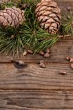Cedar branch with cones on wooden background Stock Photos